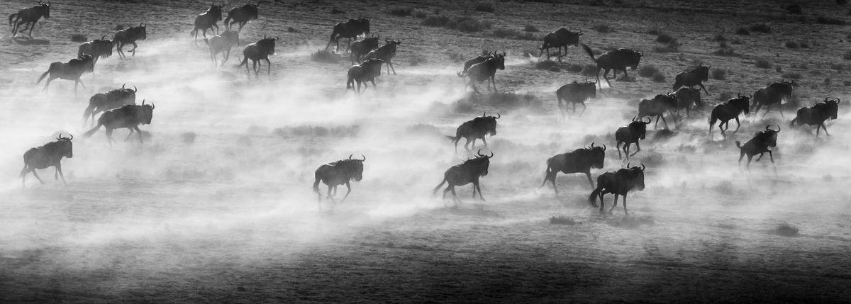 Фотограф Арт Вульф