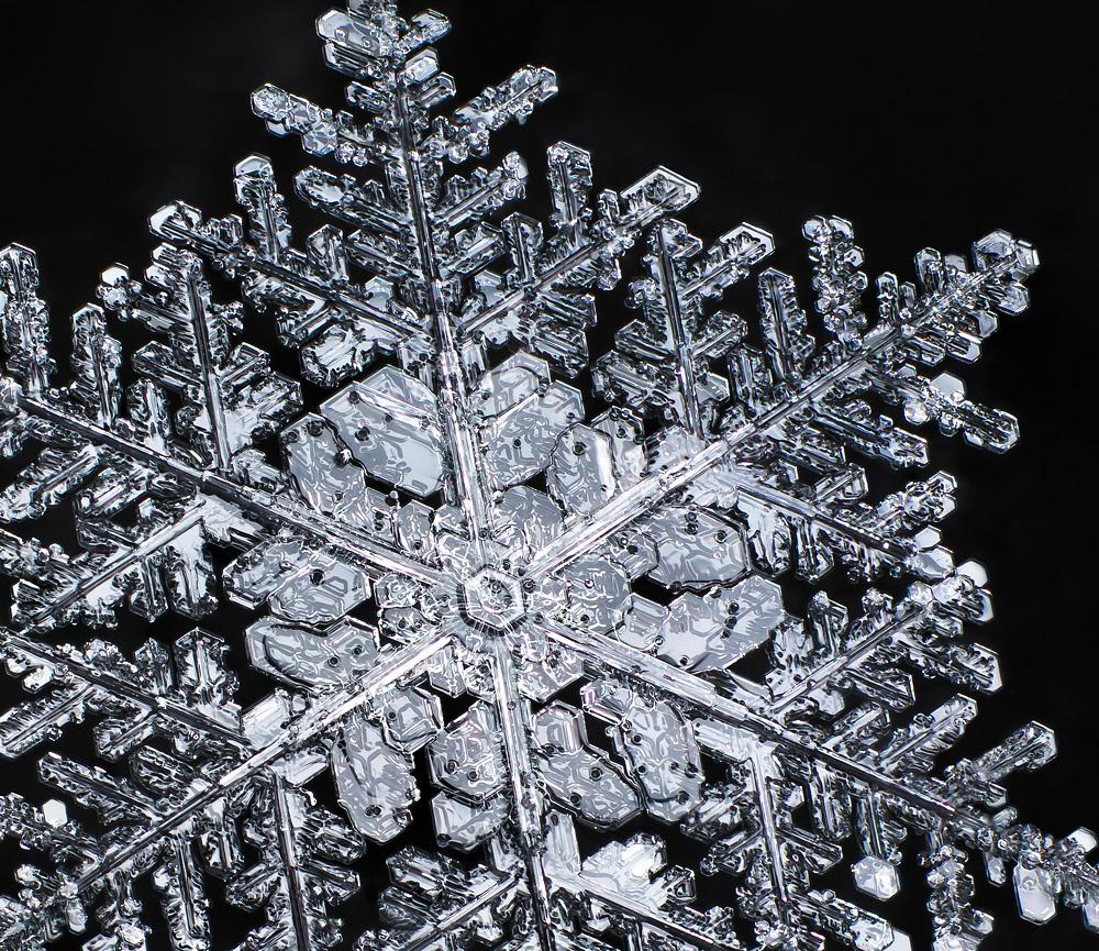 Зимний драгоценный камень, 2013. Фотография Дона Комаречка