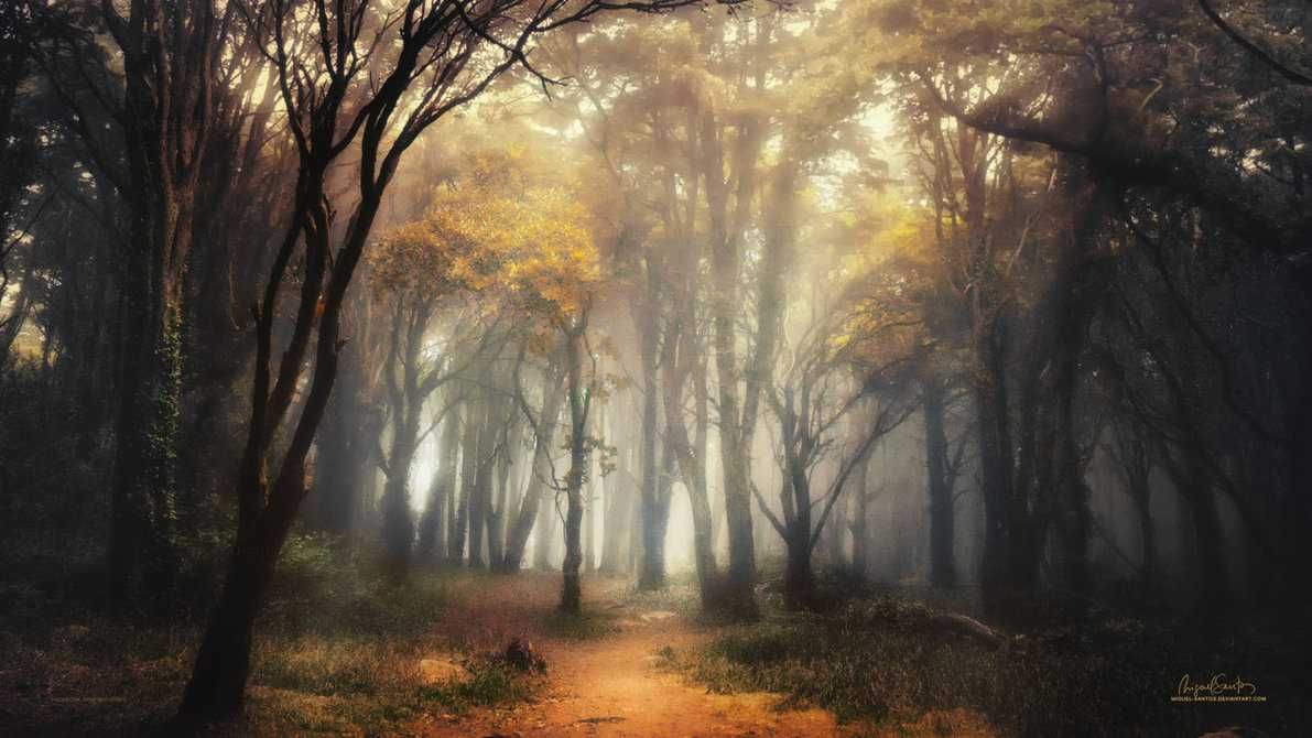 into_the_forest___2017_calendar_by_miguel_santos-d9iggk4