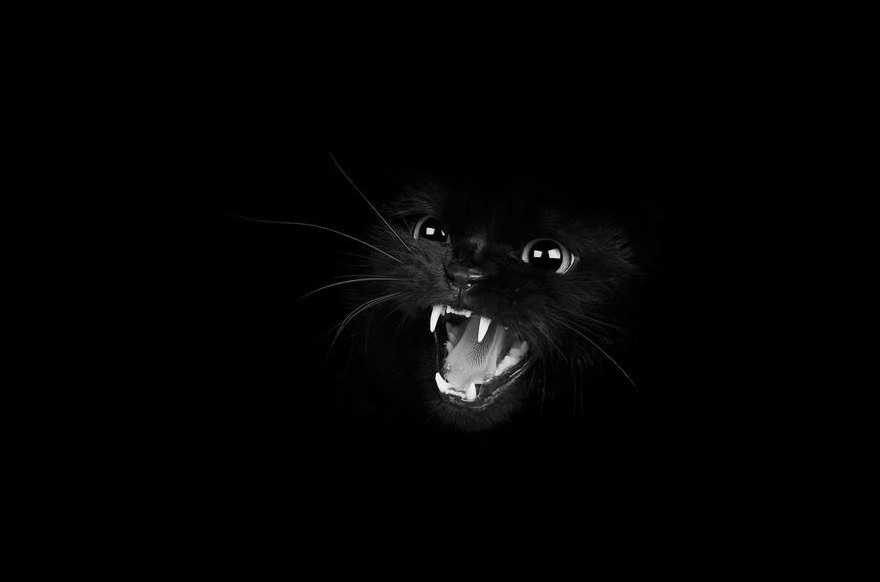 mysterious-cat-photography-black-and-white-60-57c03e9752c9d__880