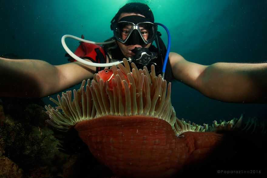 paparazsea-takes-underwater-selfies-with-ocean-wildlife-like-a-boss-58228b2a1f417__880