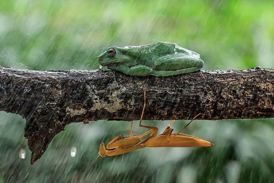 frog-photography-tantoyensen-31-5836fbac2d4bc__880