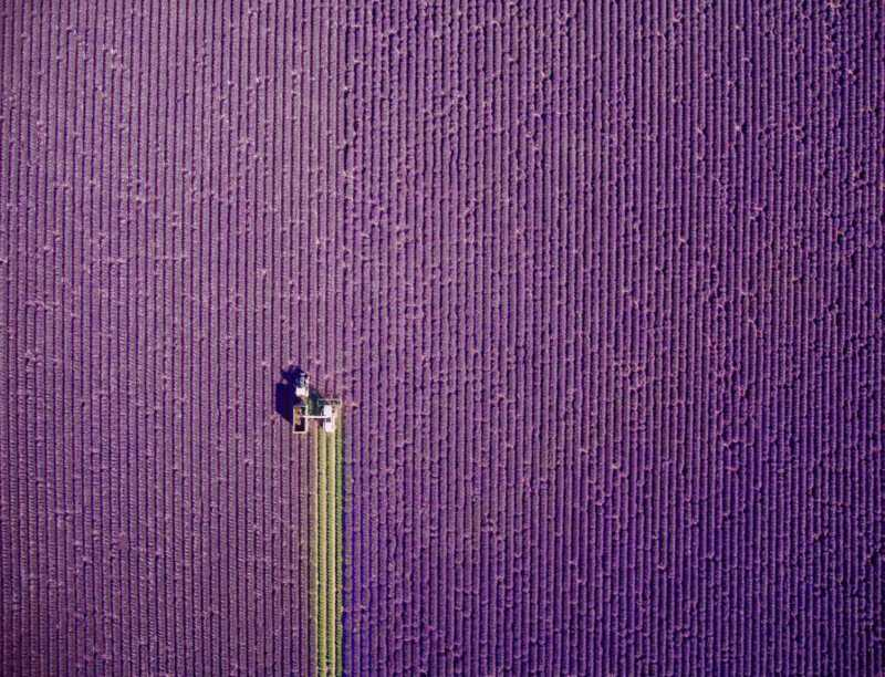 valensole-provence-france-by-jcourtial-800x612