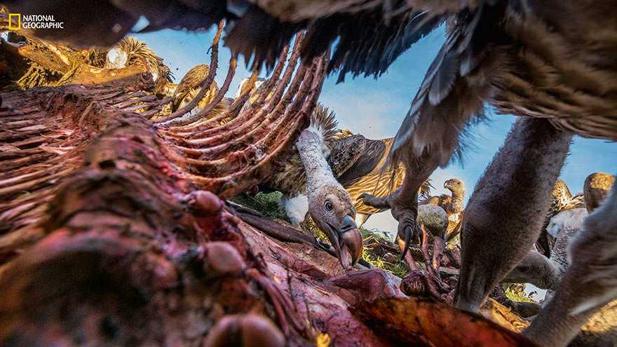 best-photos-2016-natgeo-national-geographic-97