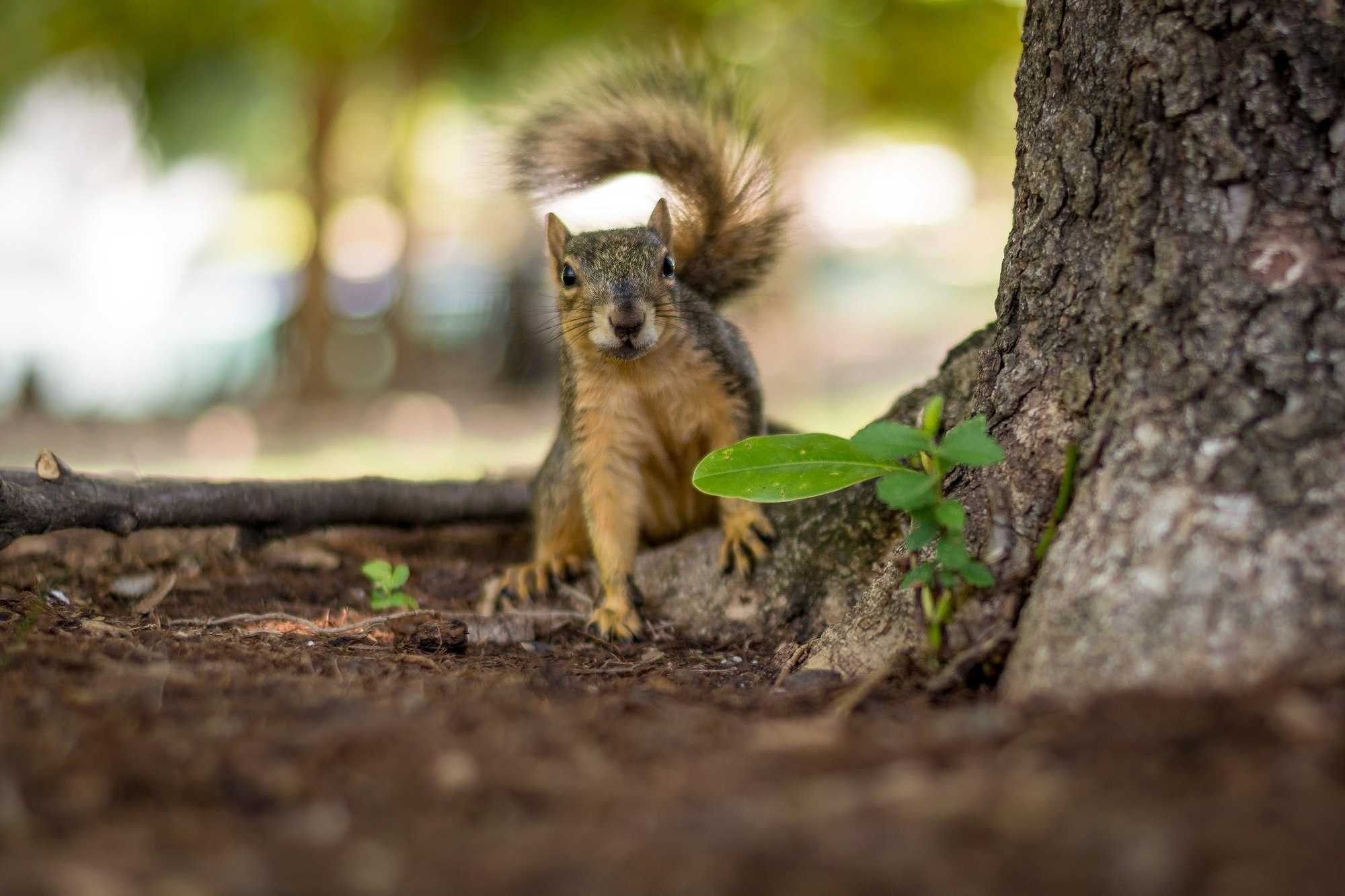 tips-for-sharp-photos-squirrel