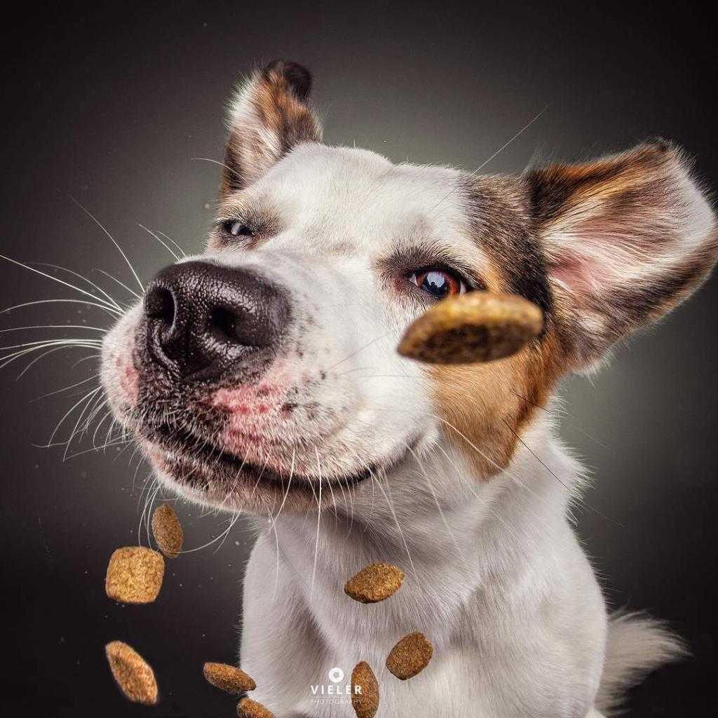 радостью прикольные собаки смешные фото каждый