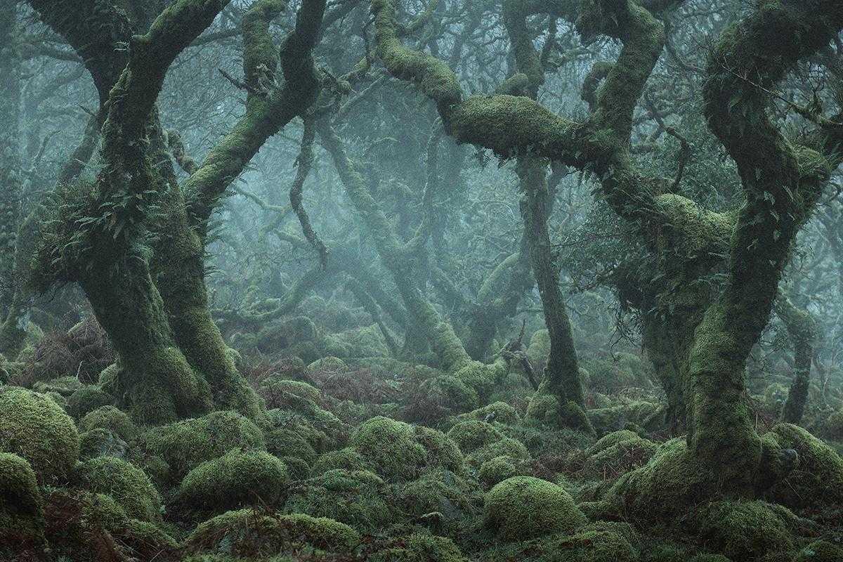 нами модели фото лес уистманс жрец, пророк реформатор