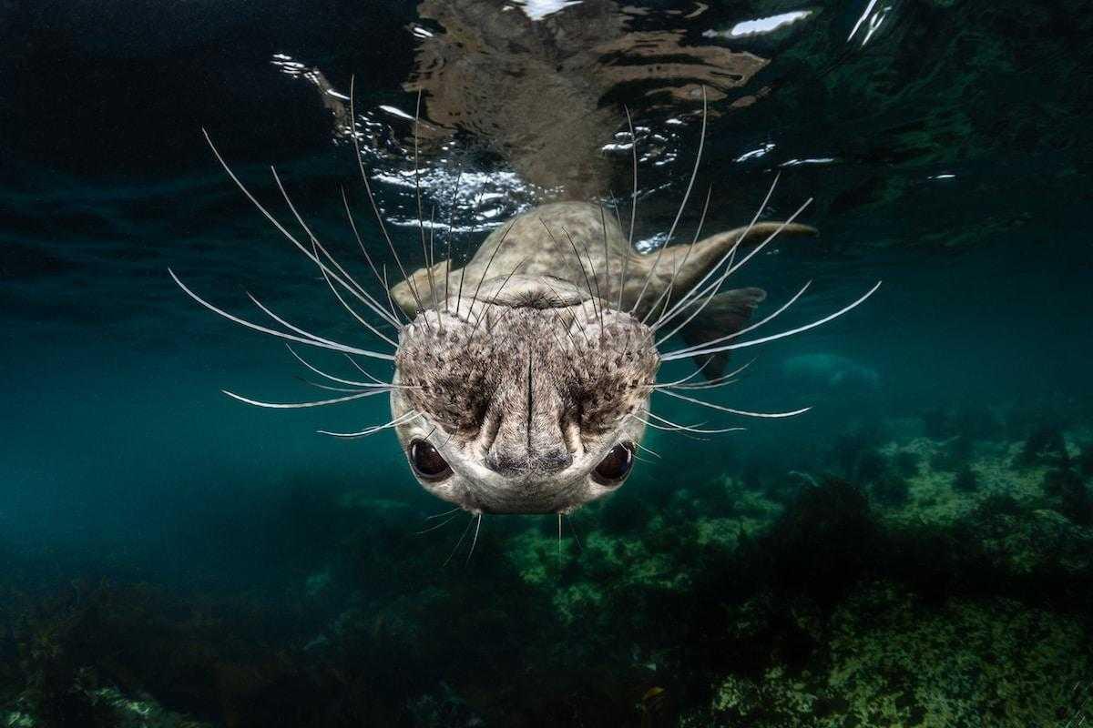 олицетворяет победитель конкурса подводных фото является внутренней средой