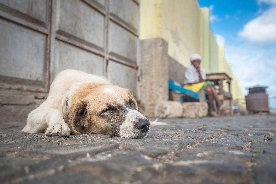 будет добро картинки с бездомными животными для сайта должен быть