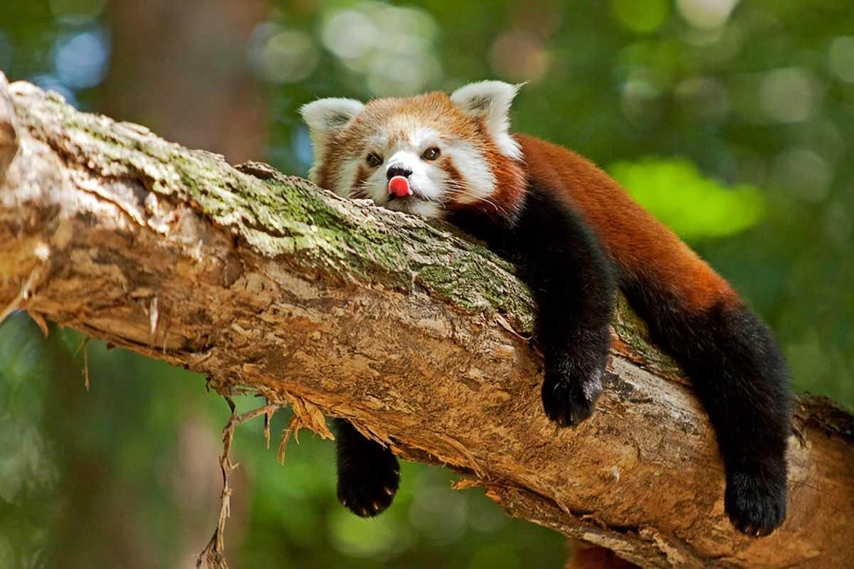 семье животные красной книги всего мира фото еще