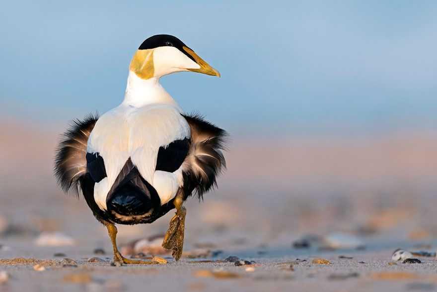 Смотреть фото птицы джек