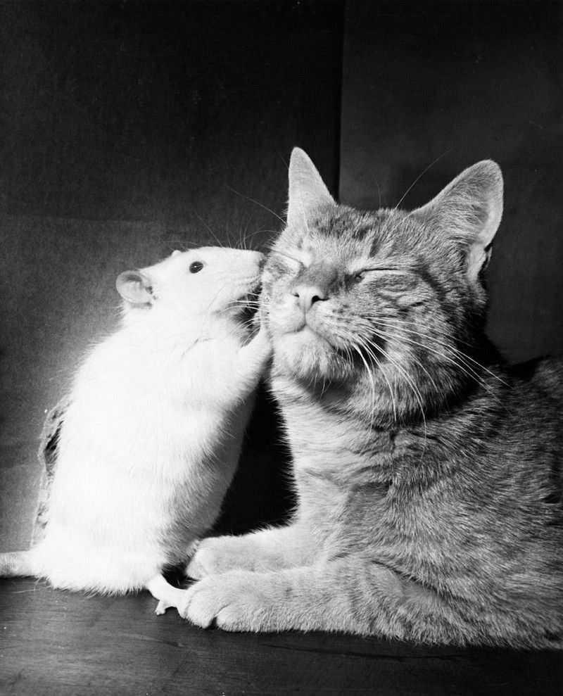 Картинки с кошками и мышками, открытка