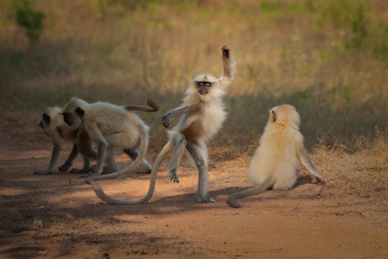 Sarosh-Lodhi_Dancing-Away-to-Glory_00005