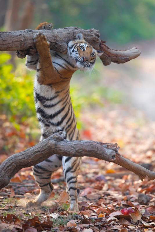 Siddhant-Agrawal_Smoked-Deer-for-Dinner_